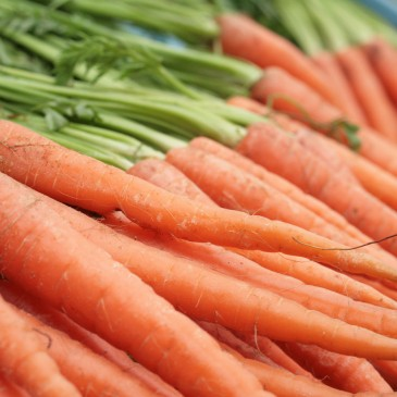 Grow So Easy: Carrots