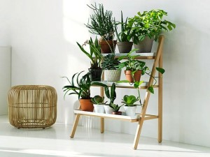 urban house plants