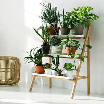 Improving urban air quality with common house plants