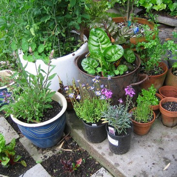 Intrepid Gardens 101: Choosing containers